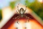 Warum ihr niemals eine Spinne in eurem Haus töten solltet
