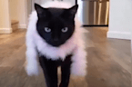 Meet Rover, the hippest kitty to grace the catwalk