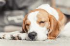 In welcher Position schläft euer Hund? Es sagt viel über seinen Charakter aus!