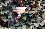 Kamera soll Eindringling im Garten entlarven: Dann traut die Familie ihren Augen nicht