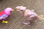 This adorable lovebird doesn't let PBFD stop him from loving life