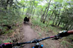 Dogs run on Trail While Their Owner Rides on Mountain Bike Behind Them