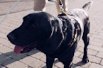 Is it rude to ban service animals from your wedding?