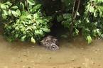 Überschwemmung: Mann rettet Hund vor dem Ertrinken