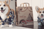 Corgis in retail store uniforms are the most adorable thing