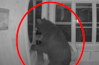 Security camera captures black bear breaking into home for pizza