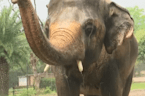 Elephant retires to sanctuary after 35 years at zoo
