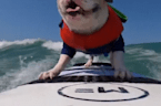 Annual dog-surfing competition goes virtual