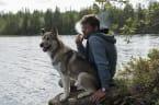 So wirkt sich Passivrauchen auf die Gesundheit deines Haustieres aus