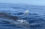 Kayakers have incredibly close humpback whale encounter