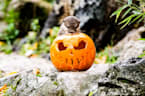 Halloween has arrived at ZSL London Zoo
