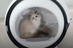 High-tech litter box automatically cleans after your cat