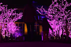 The Royal Botanic Gardens are lighting up for Christmas at Kew