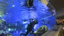 始まりは女子高生のカワイイ、TRYBOTSのペンギン型ロボが水族館で本物と遊泳。開発は夢の途中