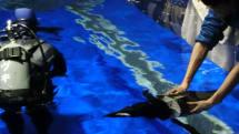動画:TRYBOTS「もるペン!」テスト遊泳、5人の高校生が作った羽ばたきで泳ぐペンギンロボット