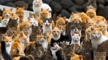 厳戒態勢下のベルギーで突如猫ツイ祭りが勃発。テロリストに警察の動きを伝えるニャ~!