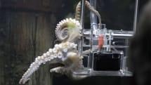 水族館でタコのプロカメラマン誕生。ソニーのカメラで記念撮影 (動画)