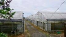 マンゴーの成長をIoTで加速するーー果実栽培にLoRa活用、沖セル・KDDIなどが実証実験
