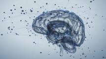 脳 to 脳ネットワーク実験で3人が相互の意思疎通に成功。2人が1人にデータを送り、嘘発見ゲームも