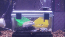 Hampture underwater colony established for science, leads the way for future hamster space exploration