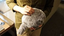 Qooboのしっぽロボットクッションに子猫サイズの兄弟ができた