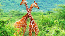 野生動物保護にAIの力を──Googleが野生動物用画像認識ツールを開発、保護活動家の大きなサポートに