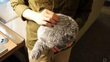 相隔近 3 年,Qoobo 猫咪尾巴抱枕现在又出了小猫款