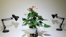 自分の意思で光に向かう「ロボット植物」ElowanをMITが発表。自然とテクノロジーの融合を目指す研究の一環