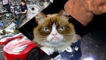 不機嫌なネコ死す・ISS用雑用ロボ・3月のテスラ死亡事故もAutopilot使用中と判明: #egjp 週末版165