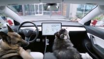 テスラ、犬を残して車から離れられる「Dog Mode」にバグ。手動で風量設定すると車内温度がうなぎのぼりに
