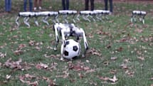 看九隻 MIT 的 Mini Cheetah 機器獵豹在草地上玩耍