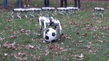 MITの4本足ロボ「Mini Cheetah」ジャカジャカじゃれ合う新動画公開。9匹で一斉にバク宙も