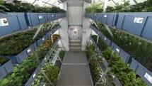 月・火星での収穫にも道すじ。ISS産レタスと地上栽培レタスの栄養価に差異なし