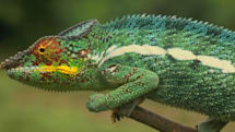 UK police arrest teens for using Lizard Squad's paid DDoS service