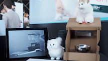 CatFi Box is the Google Cardboard of smart cat feeders