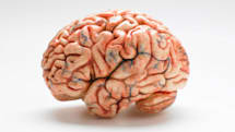 Researchers discover blood vessels in lab-grown mini-brains