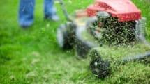 科学家发现将草转换成汽油的简便方法