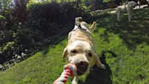 GoPro's new Fetch mount lets your pooch capture video in comfort