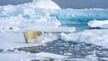Rise in Arctic Ocean acid pinned on climate change