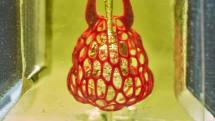 Bioengineers 3D print complex vascular networks