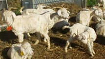 The Daily Grind: What behaviors get your goat?