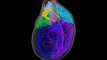 Creating the first 3D map of the heart's 'brain'