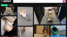 UK's antitrust watchdog is investigating Facebook's purchase of Giphy