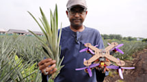 Researchers have turned pineapple leaves into drone parts