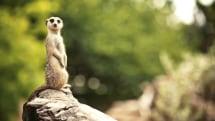 Meerkat the livestreaming app is no more