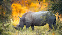 6 technologies that protect endangered animals from poachers