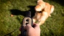 Garmin announces new dog collars, talks up 'Bark Odometer'