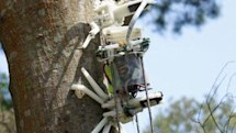 Treebot climbs trees, is a robot (video)