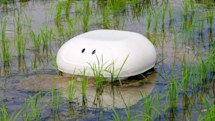Robot 'duck' keeps weeds out of rice paddies