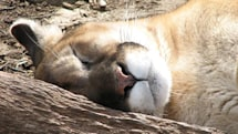Poll: Is Mountain Lion devouring your Mac's battery life?